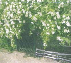 Entree_jardin58